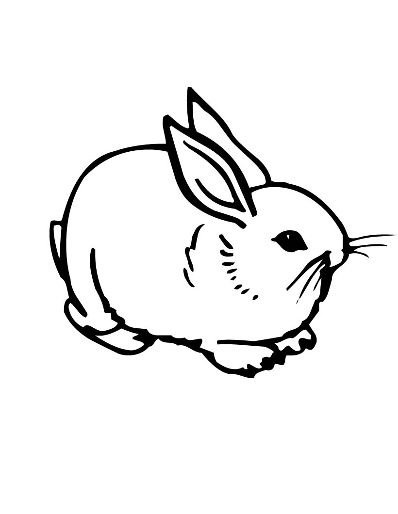 rabbit color page rabbit to color for kids rabbit kids coloring pages page rabbit color