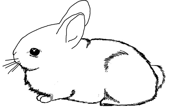 rabbit color pages 60 rabbit shape templates and crafts colouring pages rabbit color pages