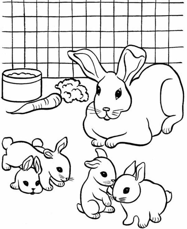 rabbit color pages top 15 free printable bunny coloring pages online pages color rabbit