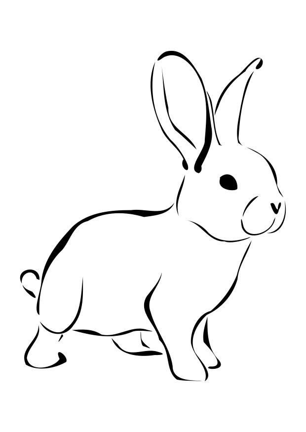 rabbit picture for colouring free printable rabbit coloring pages for kids colouring rabbit for picture 1 1