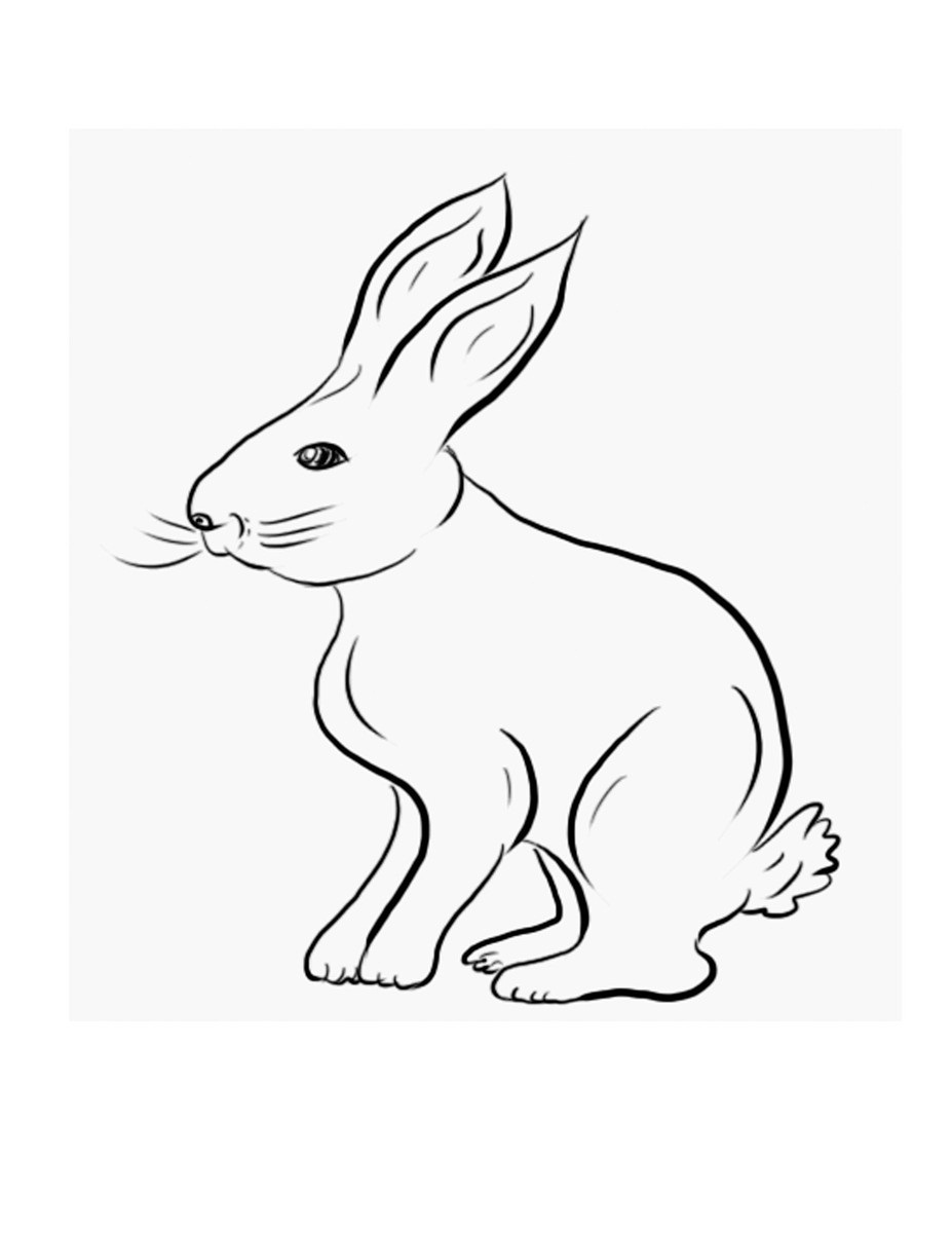 rabbit pictures for kids free printable rabbit coloring pages for kids pictures for rabbit kids