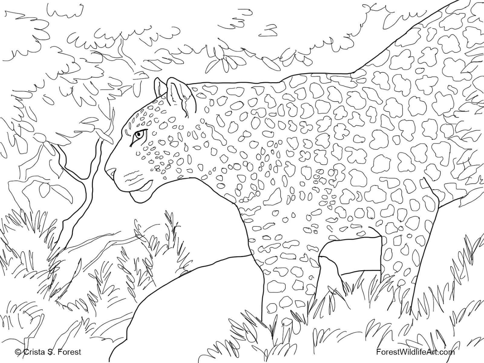 rainforest animals coloring pages 111 best jungle safari vbs images wild animals big cats coloring pages rainforest animals