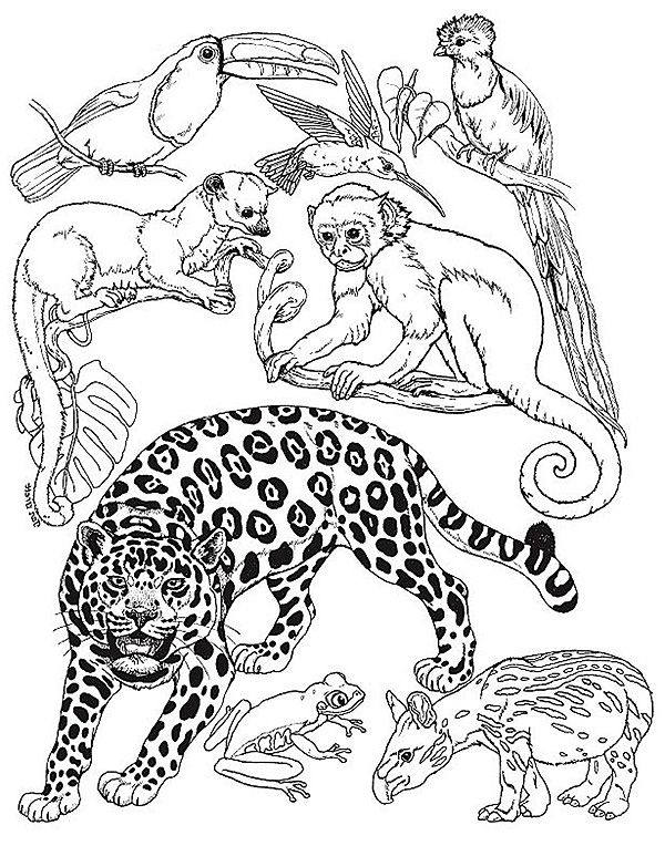 rainforest animals coloring pages free printable rainforest coloring pages coloring home pages rainforest animals coloring