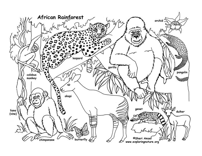 rainforest animals coloring pages rainforest animal coloring pages getcoloringpagescom coloring animals rainforest pages