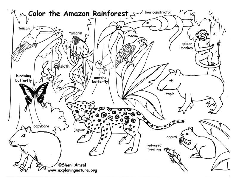 rainforest animals coloring pages rainforest animal coloring pages getcoloringpagescom coloring rainforest animals pages