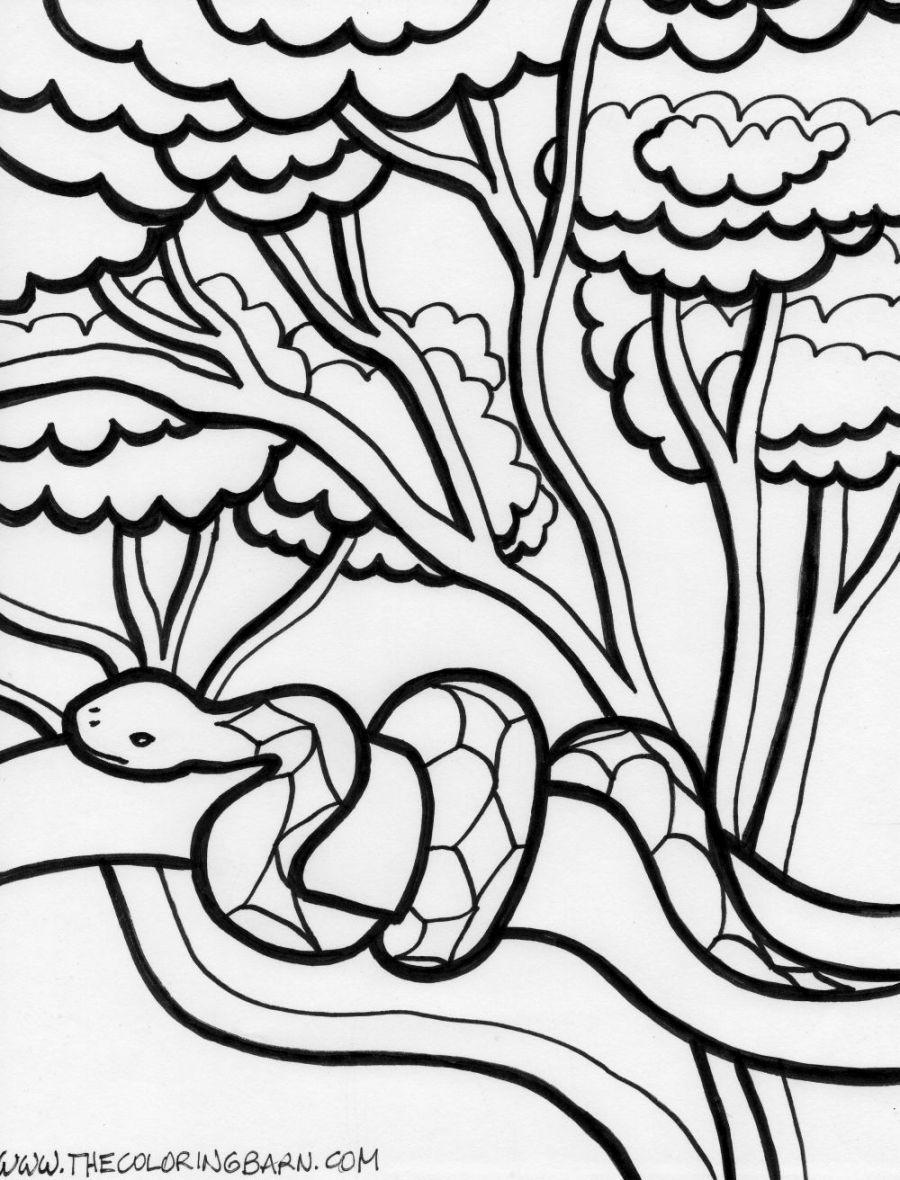rainforest animals coloring pages rainforest animal coloring pages getcoloringpagescom rainforest animals coloring pages