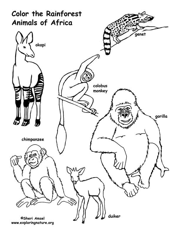 rainforest animals coloring pages rainforest animals small for rainforest diarama ecc coloring rainforest pages animals