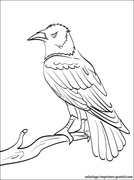 ravens coloring pages baltimore ravens helmet page coloring pages pages coloring ravens