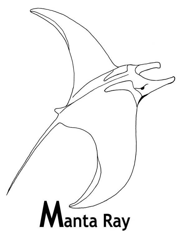 ray printable coloring pages sea animal stingray coloring pages for kids pages ray coloring printable