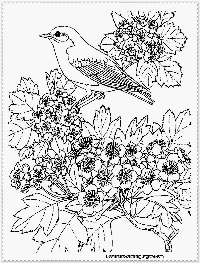 realistic coloring pages badger coloring pages realistic realistic coloring pages realistic pages coloring