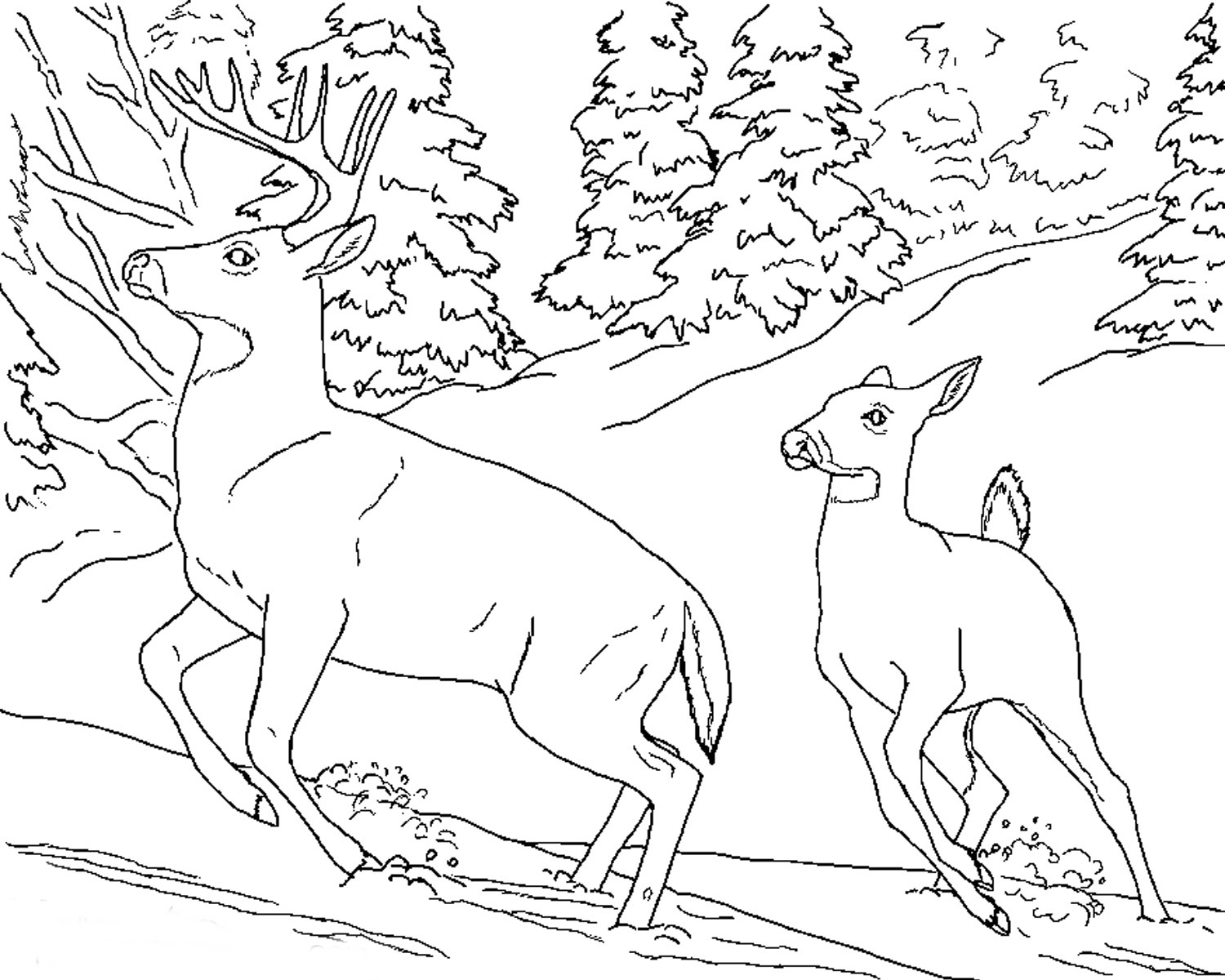 realistic coloring pages tpwd kids color the fox squirrel realistic pages coloring