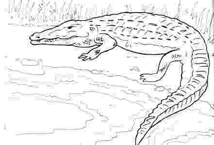 reptile coloring pages california habitats mammals birds amphibians reptiles pages coloring reptile