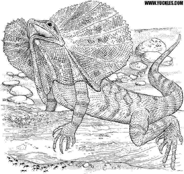reptile coloring pages reptile coloring pages to download and print for free reptile coloring pages