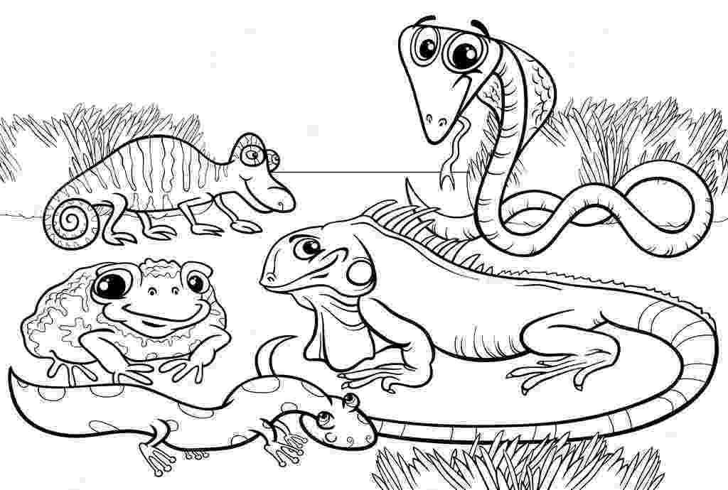 reptile coloring pages reptiles coloring page twisty noodle pages reptile coloring