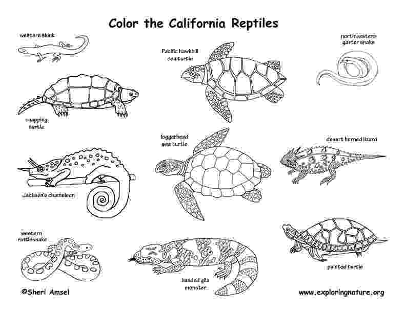 reptile coloring pages reptiles of north america coloring page coloring pages reptile
