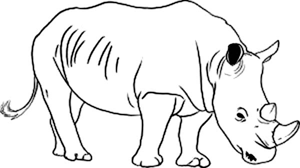 rhinoceros coloring page cute baby rhino coloring page free printable coloring pages rhinoceros page coloring