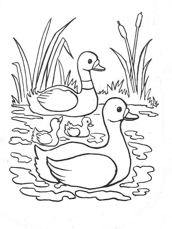 river coloring pages the best free river drawing images download from 765 free river pages coloring