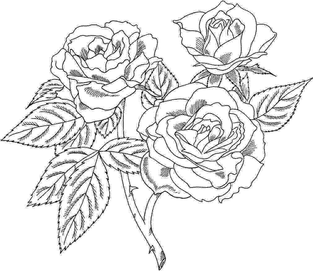 roses color pages flowers coloring pages roses pages color