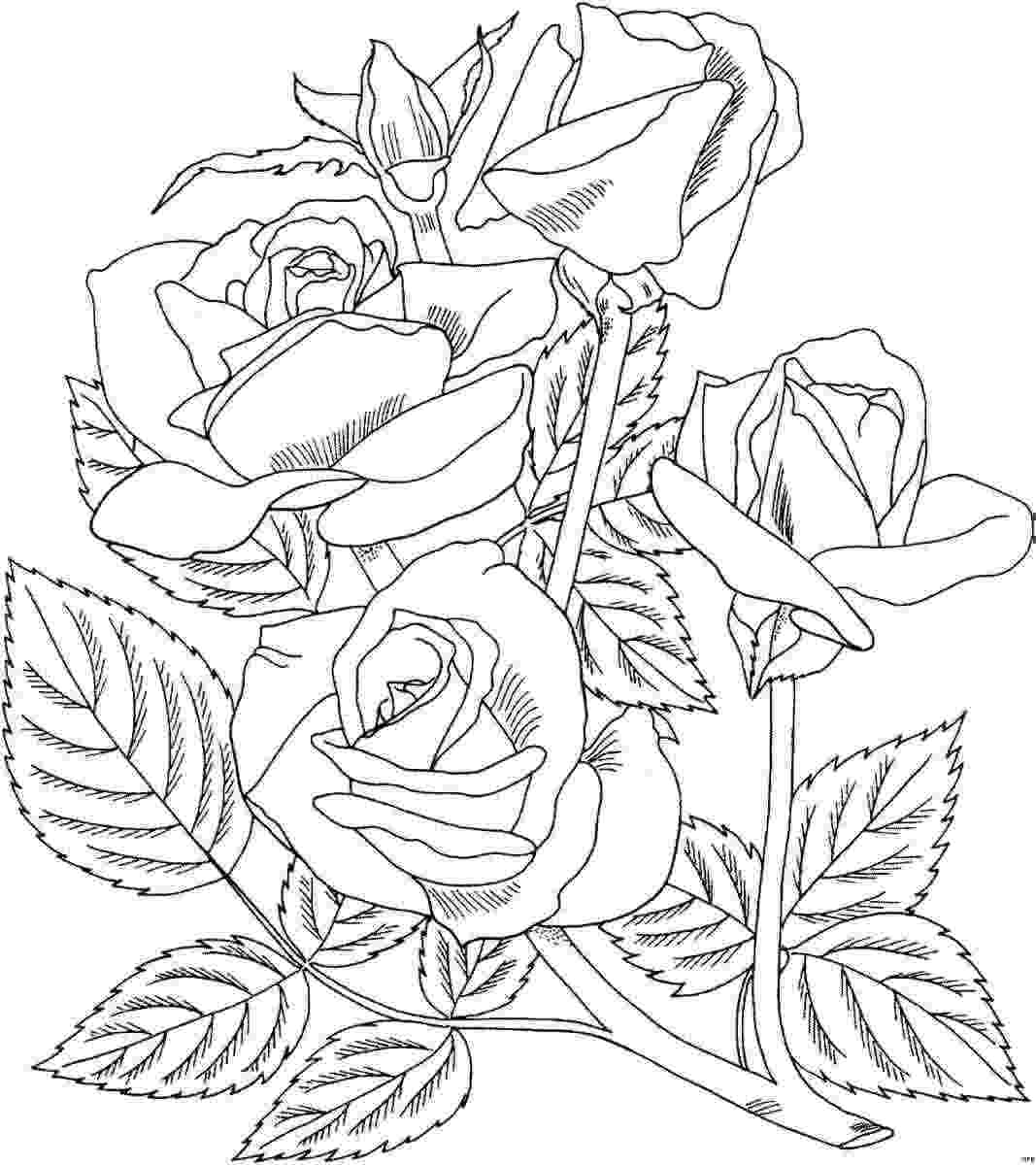 roses color pages free printable roses coloring pages for kids roses pages color