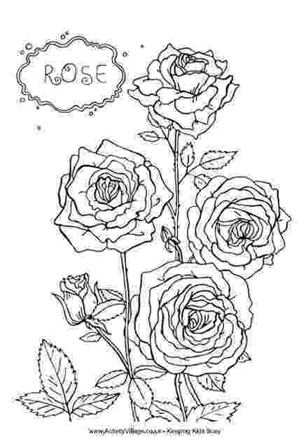 roses color pages more roses coloring pages color roses pages