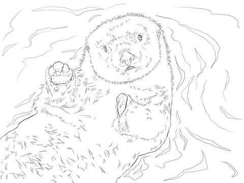 sea otter coloring page otter coloring pages download and print for free otter coloring sea page