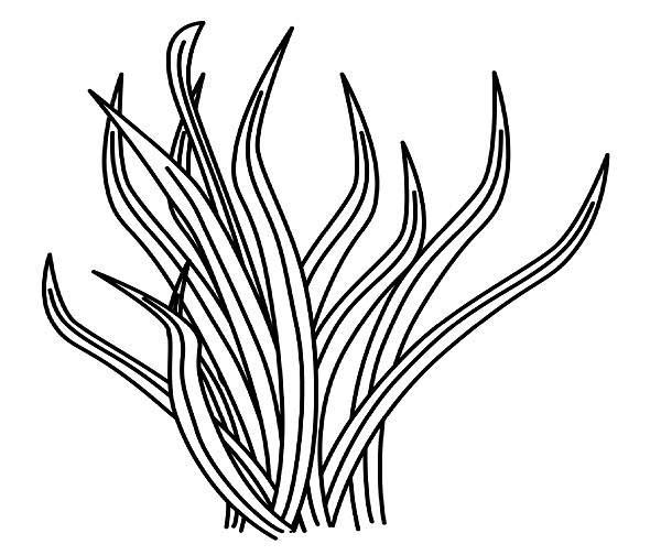 sea plants coloring pages free printable coloring pages part 4 sea coloring plants pages
