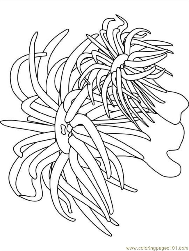 sea plants coloring pages sea anemone coloring page free seas and oceans coloring plants coloring sea pages
