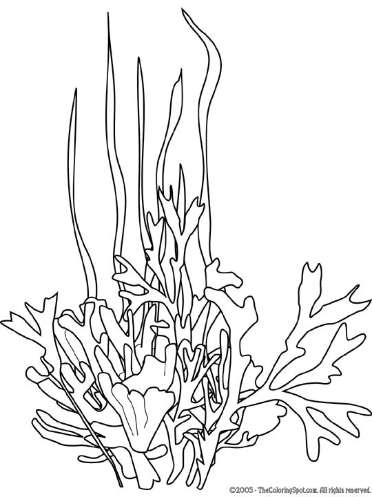 sea plants coloring pages seaweed google search line drawings for literacy coloring sea plants pages