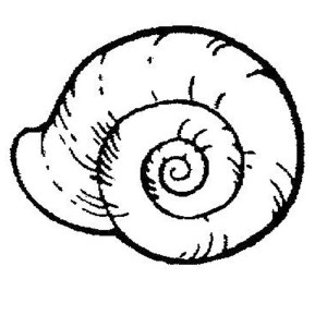 sea snail coloring page sea snail marine mollusc coloring page supercoloringcom coloring sea snail page