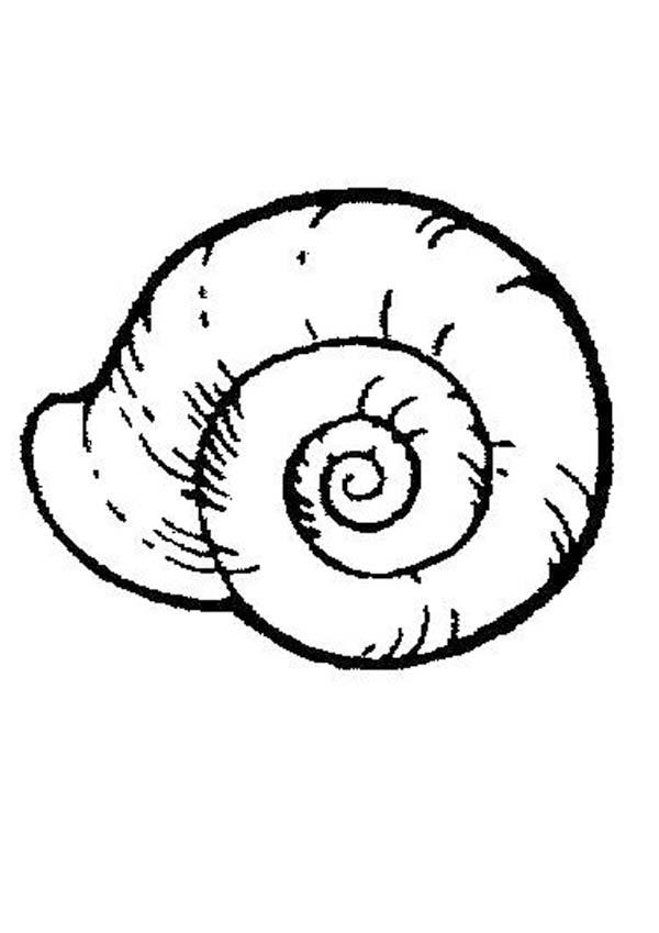 sea snail coloring page seashells coloring pages coloring home coloring sea snail page
