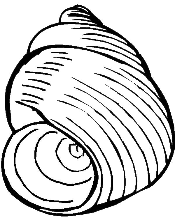 sea snail coloring page snail clipart free download on bankkita cliparts snail coloring sea page