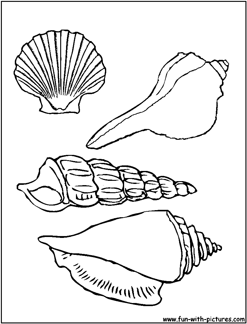 sea snail coloring page snail coloring page coloring home page coloring snail sea