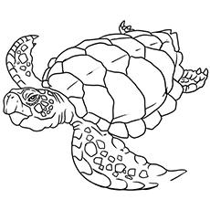 sea turtle coloring page printable sea turtle coloring pages for kids cool2bkids page coloring turtle sea