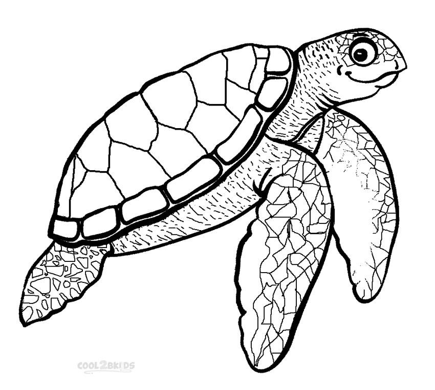 sea turtle coloring page sea turtle coloring pages kidsuki page sea turtle coloring