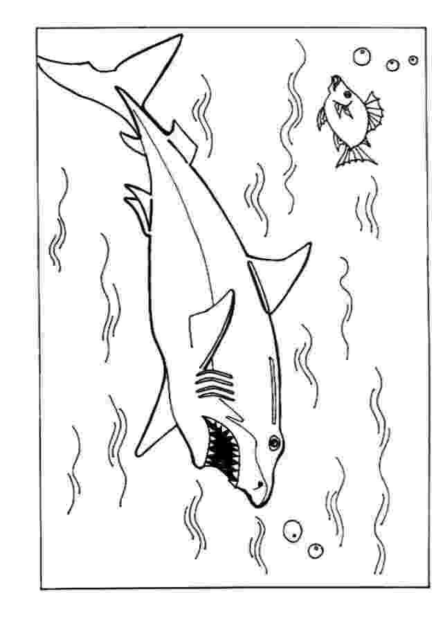 shark color pages mewarnai binatang yang hidup di air ayo mewarnai shark pages color