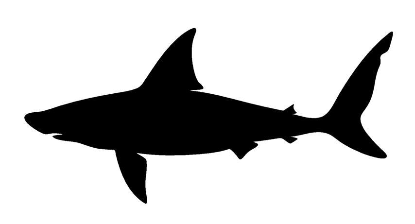 shark silouette fileshark silhouettesvg wikimedia commons silouette shark