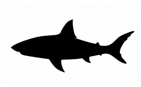 shark silouette great white shark silhouette free vector silhouettes silouette shark