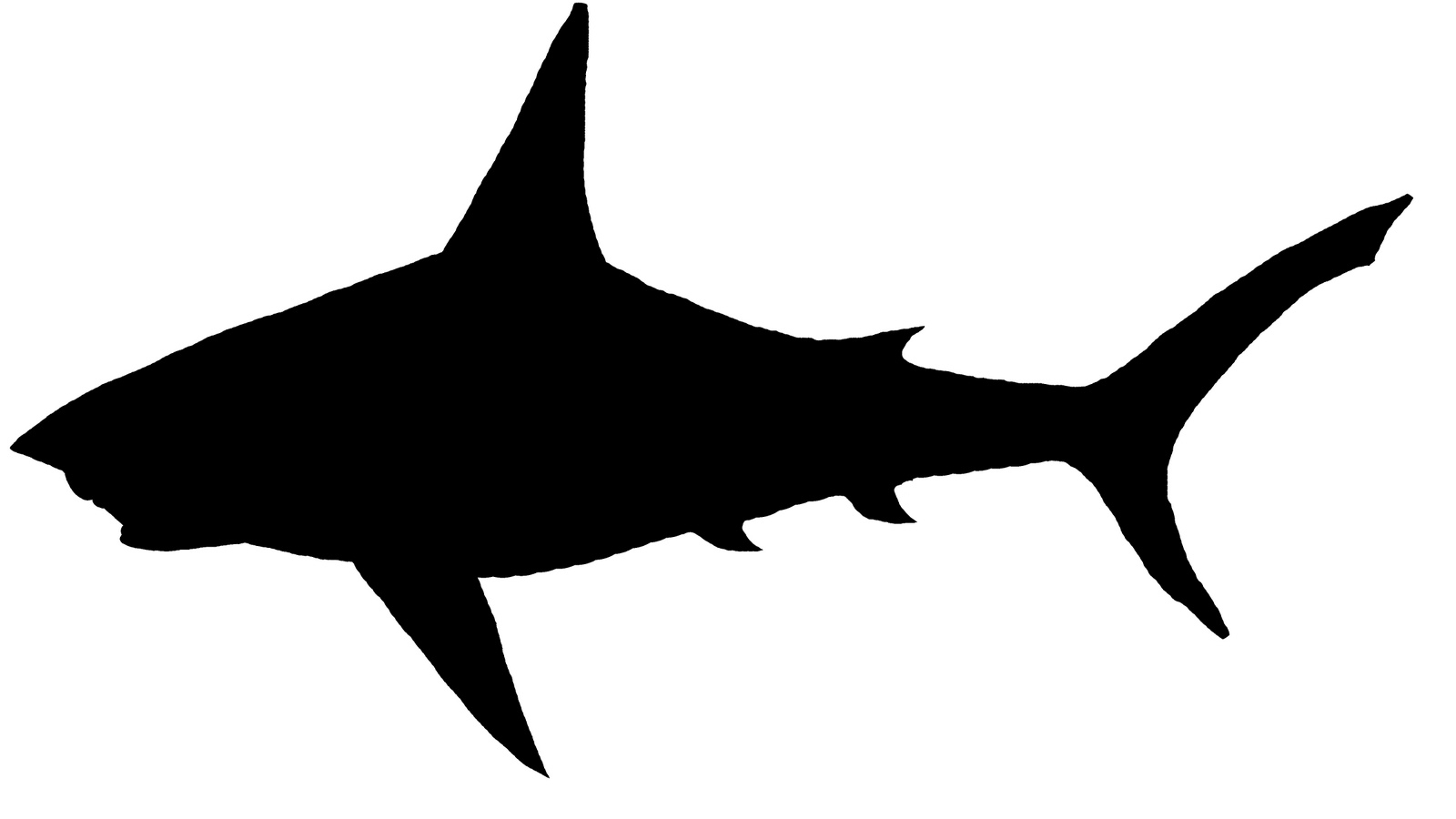 shark silouette shark silhouette amazoncom silouette shark
