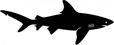 shark silouette shark silhouette vector art getty images silouette shark