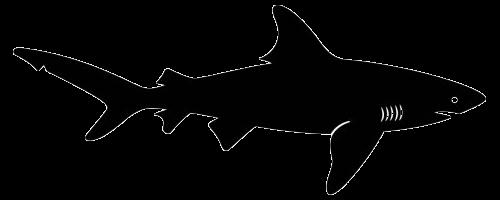 shark silouette shark silhouette vectors download free vectors clipart silouette shark
