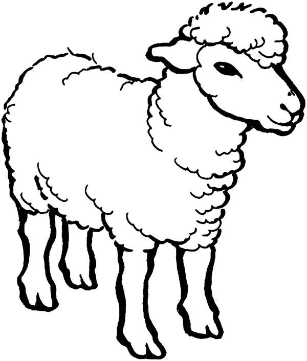 sheep coloring pages to print free printable sheep face coloring pages for kids cool2bkids print pages sheep coloring to