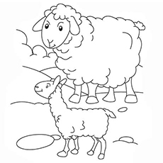 sheep pictures to color top 25 free printable sheep coloring pages online to pictures sheep color