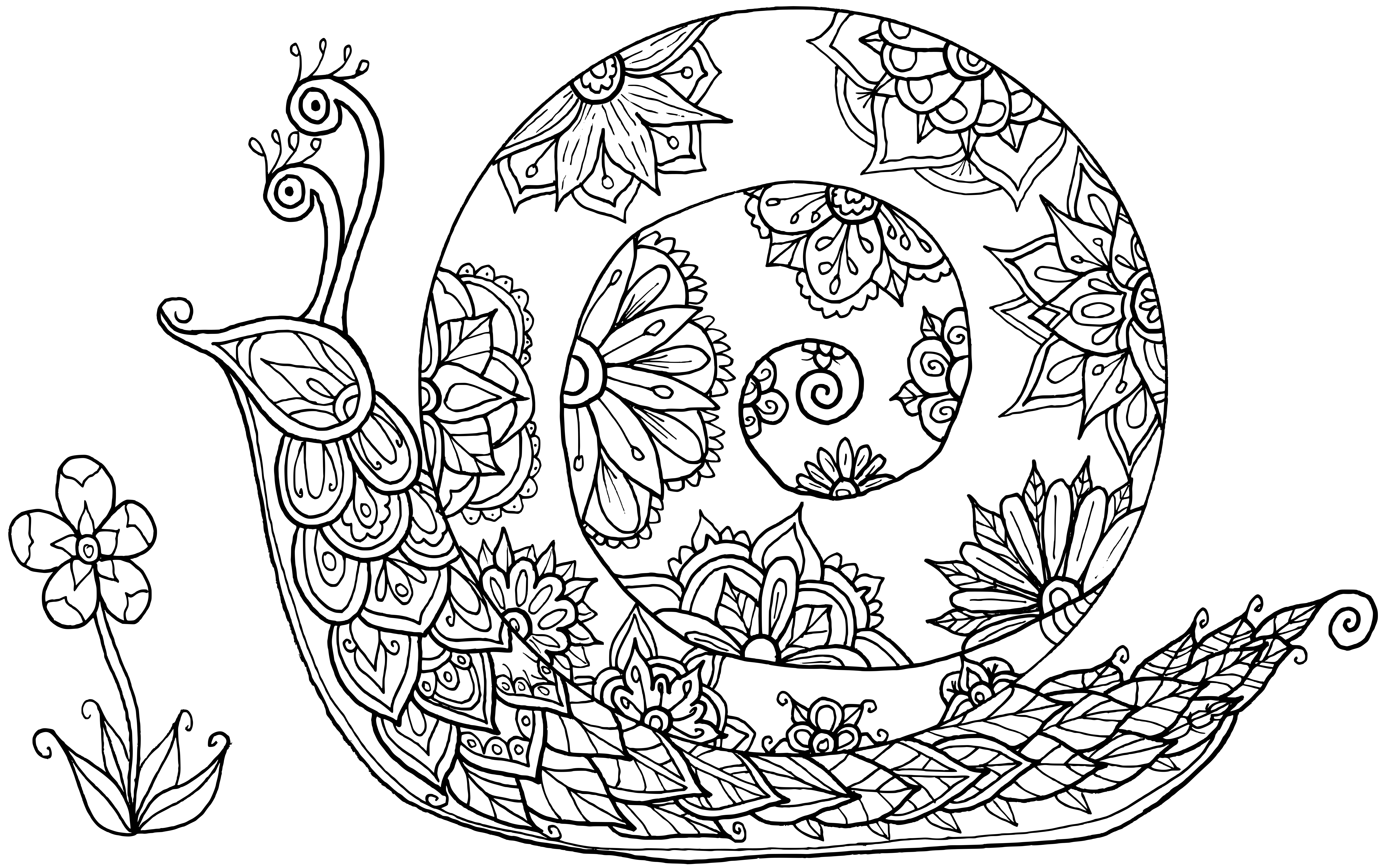 snail coloring page snail coloring pages to download and print for free coloring page snail
