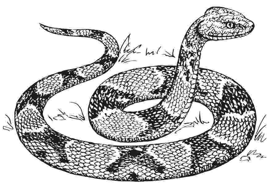 snake coloring page march 2010 coloring snake page