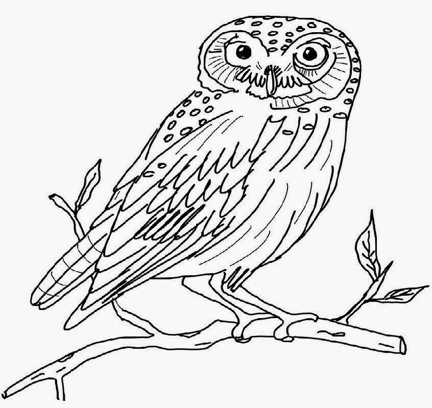 snowy owl coloring page 35 winter coloring pages coloringstar coloring page owl snowy