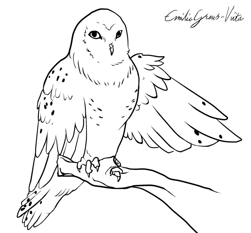 snowy owl coloring page coloring pages of snowy white owl coloring pages owl coloring page snowy