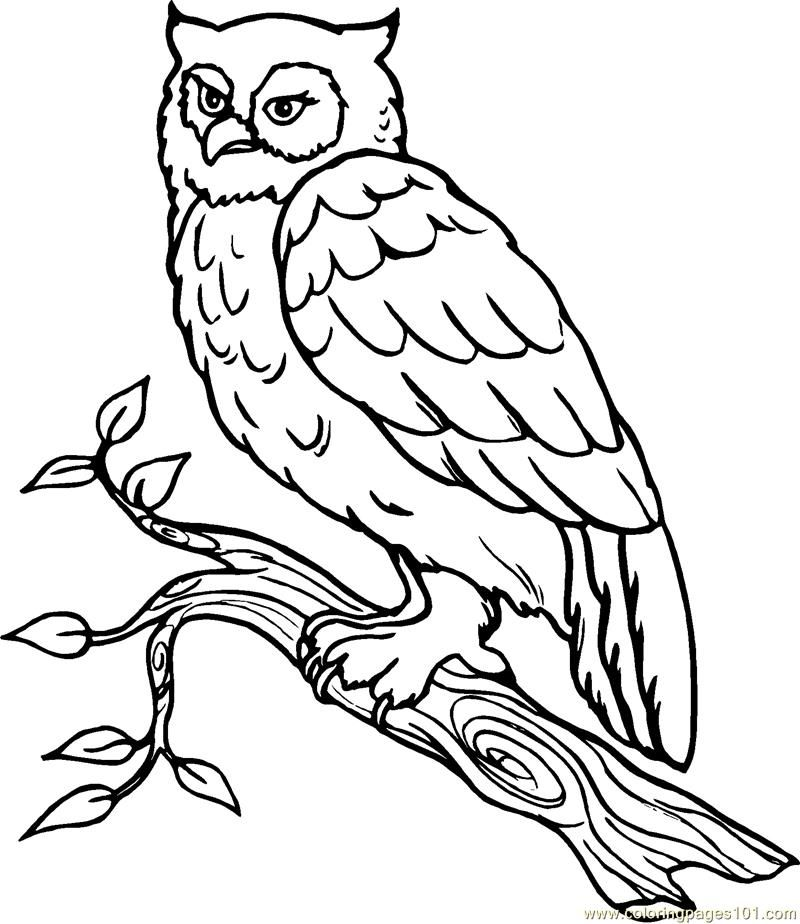 snowy owl coloring page take it outside february 2011 snowy coloring owl page