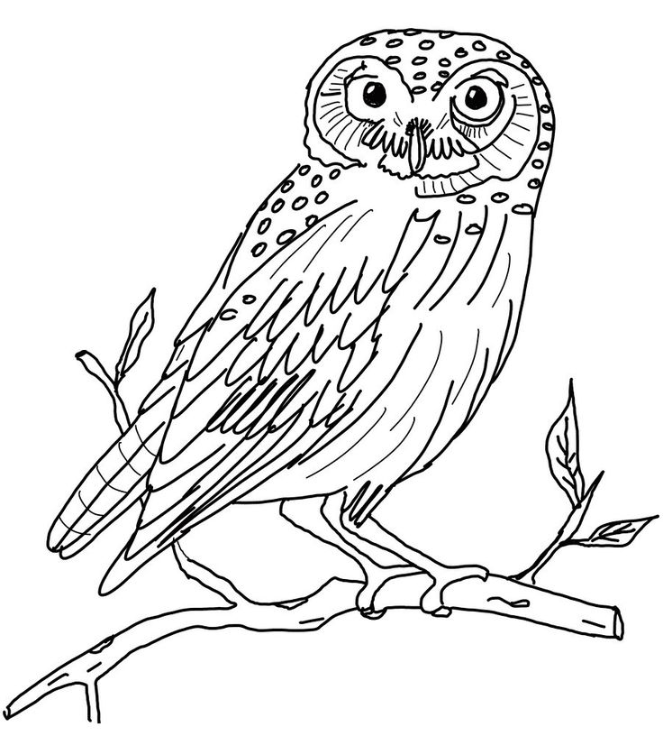 snowy owl coloring page take it outside february 2011 snowy page coloring owl