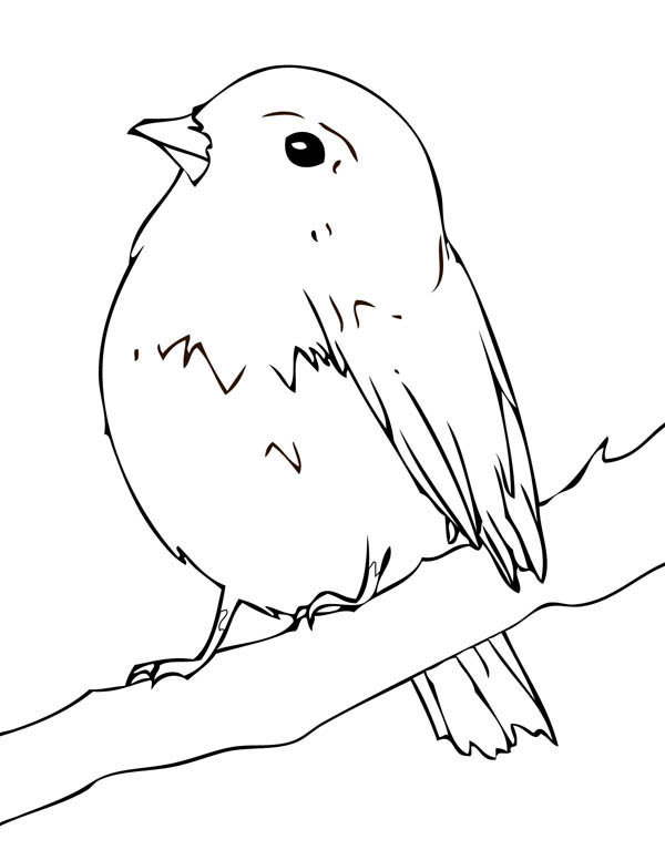 spring birds coloring pages birds coloring worksheet birds spring pages coloring