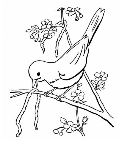 spring birds coloring pages spring bird coloring page coloringcom coloring pages spring birds